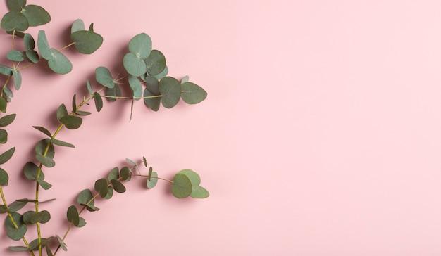흰색 배경에 유칼립투스 가지 신선한 유칼립투스 잎은 천연 오일과 향수 고품질 사진을 기반으로 화장품의 기초로
