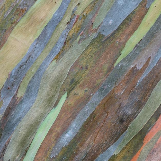 ユーカリdeglupta木の樹皮の質感