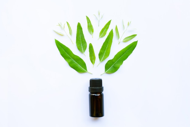 Eucalyptus essential oil on white