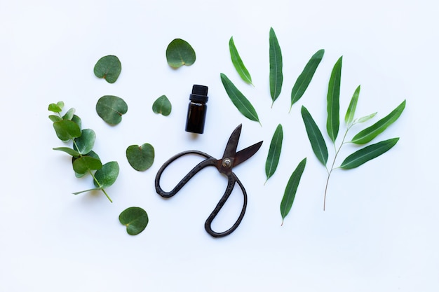 Eucalyptus essential oil with branch, leaves of eucalyptus and vintage scissors on white