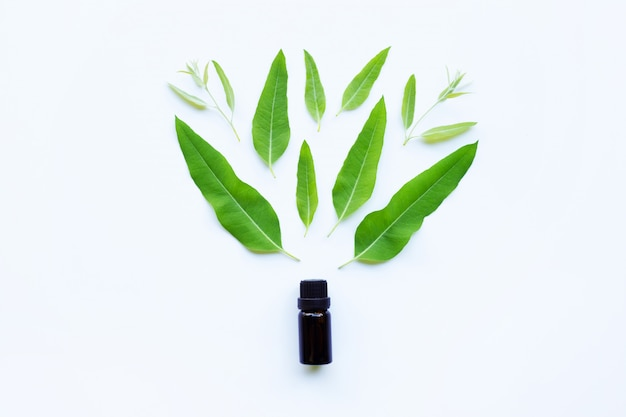 Eucalyptus essential oil with green leaves on white