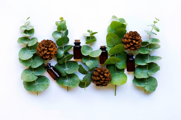Eucalyptus essential oils with branches  of eucalyptus and  pine cones