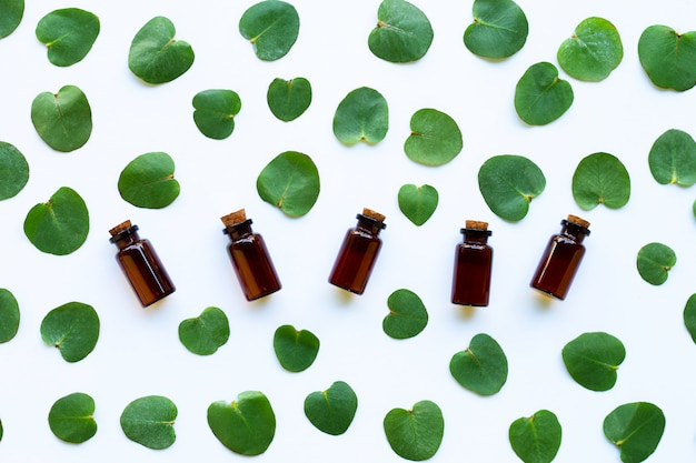 Eucalyptus essential oils with leaves