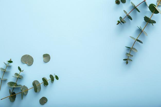 유칼립투스 꽃 분기 프레임 색상 배경입니다. 유칼립투스는 파란색 배경에 초대장 배열을 위한 꽃 프레임 봄 녹지 배너를 남깁니다. 복사 공간이 있는 상위 뷰 꽃 프레임입니다.