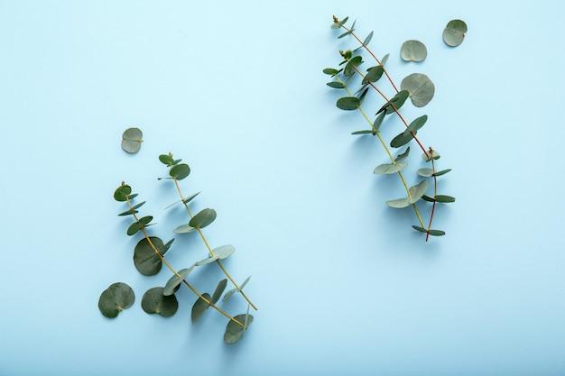 파란색 배경에 유칼립투스 꽃 프레임입니다. 유칼립투스 가지로 만든 꽃 프레임 나뭇잎. 초대장 배열을 위한 봄 녹지입니다. 모의 복사 공간이 있는 상위 뷰 유칼립투스 프레임입니다.