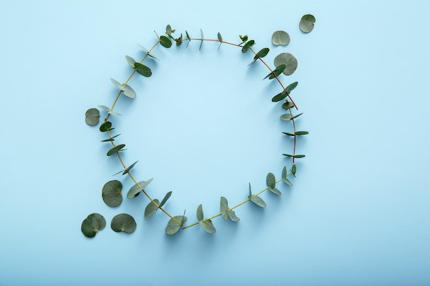 Eucalyptus leaf circle. eucalyptus flowers frame on color blue background. floral circle frame made of eucalyptus branches leaves. top view eucalyptus frame with mockup copy space.