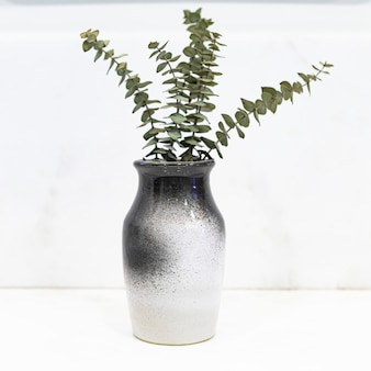 Eucalyptus leaves in a black and white vase