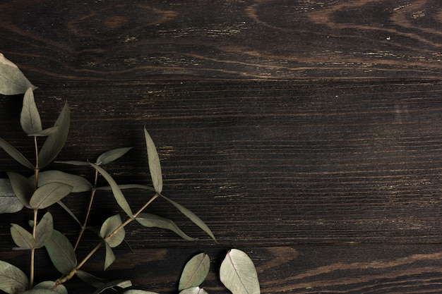 Eucalyptus leaves branches on dark wooden background