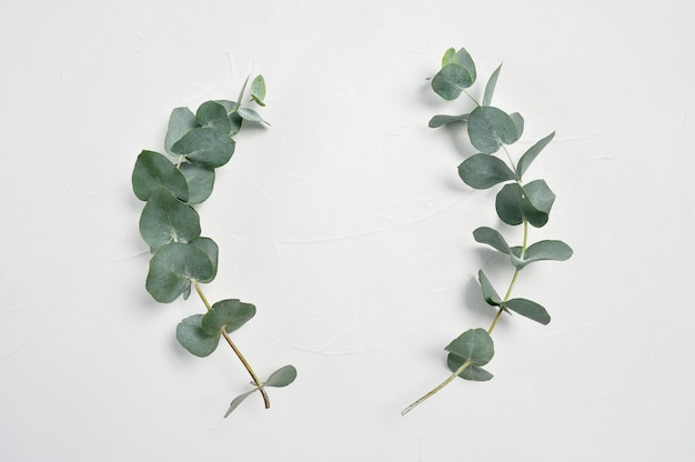 Eucalyptus leaves frame on white background with place for your text