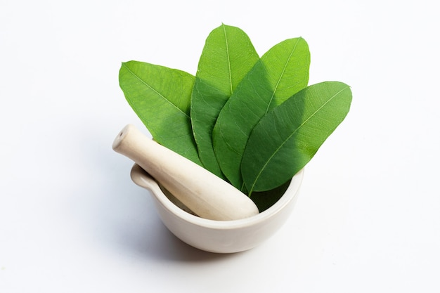 Eucalyptus leaves in mortar with pestle