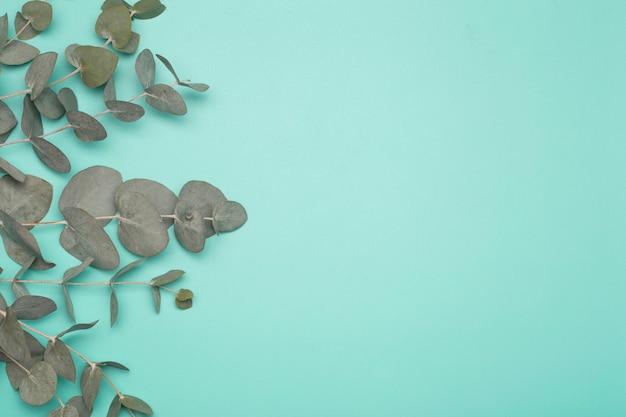 Листья эвкалипта на цветном фоне