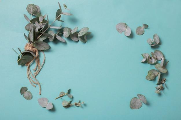 Eucalyptus leaves on paper background