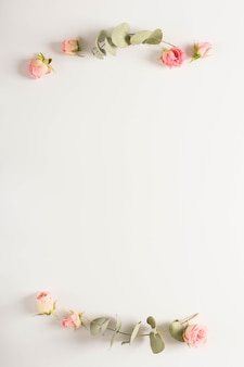 Eucalyptus leaves twig with pink rose buds on white backdrop