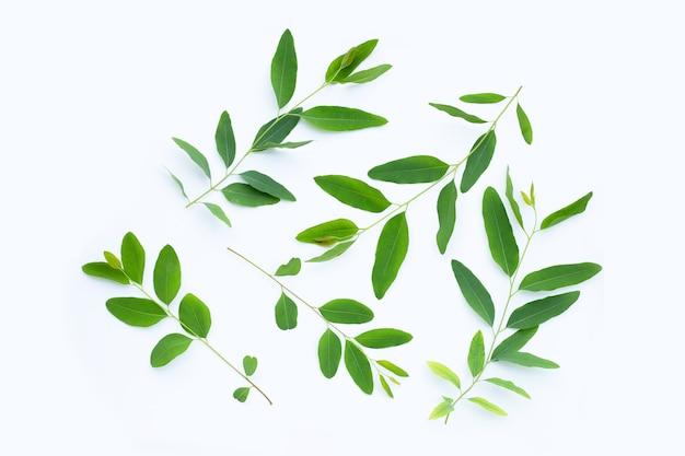 Eucalyptus leaves on white surface