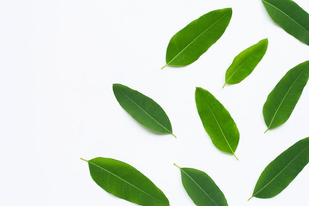 Eucalyptus leaves on white wall.  copy space