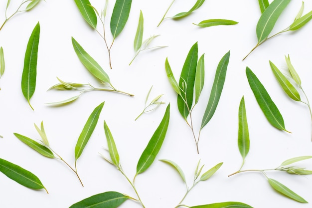 Eucalyptus leaves on white
