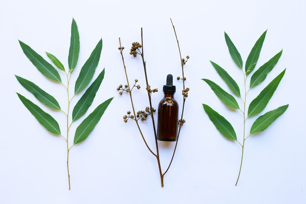 Eucalyptus oil bottle with leaves on white.
