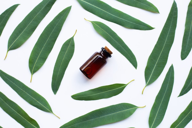 Eucalyptus oil bottle with  leaves on white.