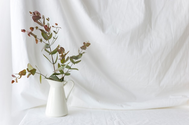 Eucalyptus populus branch in white ceramic vase over the white curtain backdrop