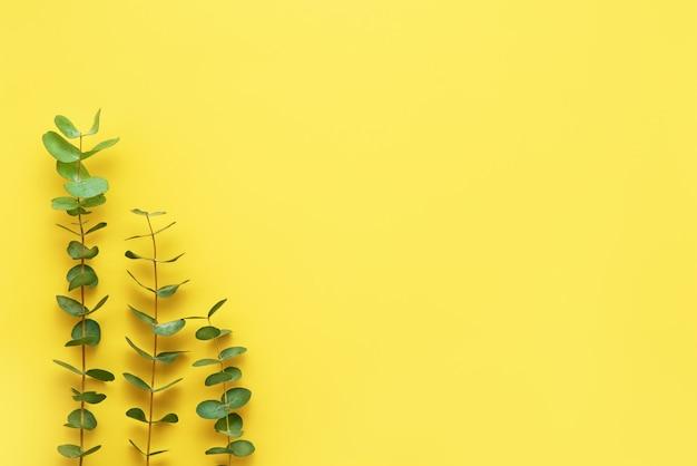 明るい黄色の背景にユーカリの小枝。フラットレイ、テキスト用のコピースペース