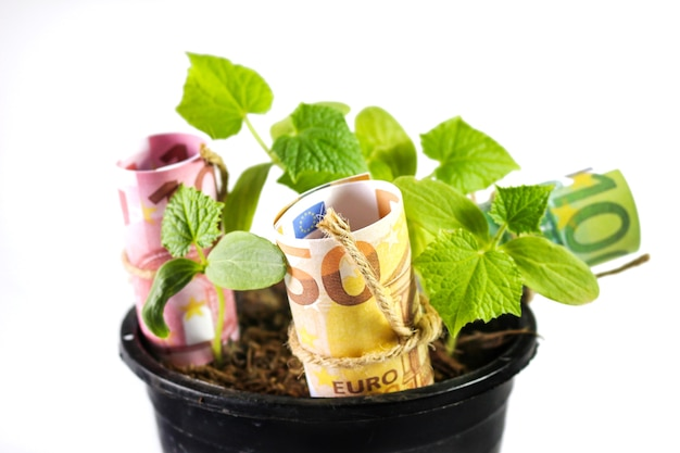 Euro banknotes on plants for glowing finance concept