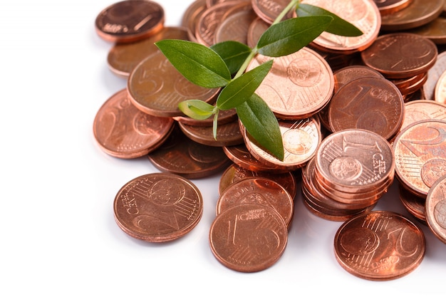 Euro cent coins and green sprout