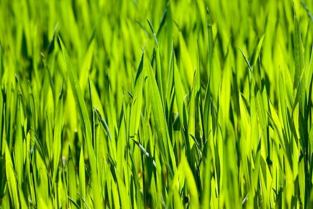 Европейские агротехнологии для полевых работ по выращиванию зерновых, пшеницы или других злаков.