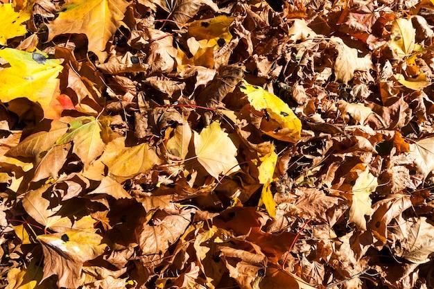 木々の色、特定の季節、特別な季節が変わる都市公園のヨーロッパの秋
