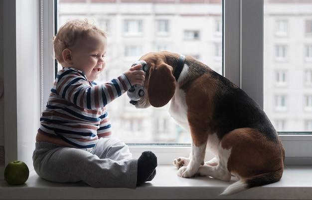 Европейский мальчик и собака бигль сидят и играют на подоконнике в комнате