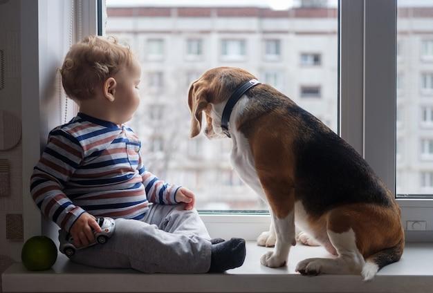 유럽 소년과 비글 개가 방의 창턱에 앉아서 놀아요.