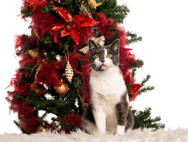 クリスマスツリーの横に座っているヨーロッパの猫