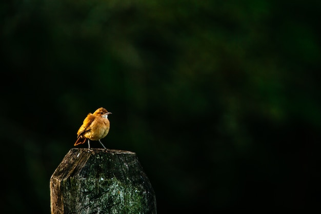 European robin standing on wood under the sunlight