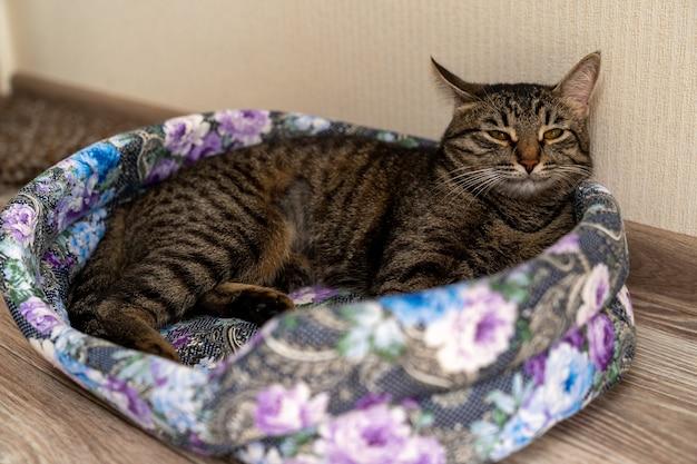 European shorthair cat resting in its crib
