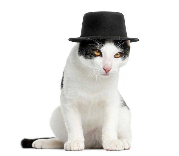 Европейская короткошерстная кошка в цилиндре сидит изолированно на белом