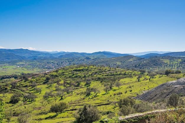 アルバニアのオリーブ植物とヨーロッパの春の風景
