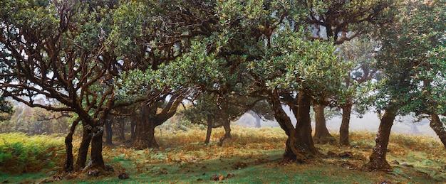ヨーロッパの木々とポルトガルの森。秋に。