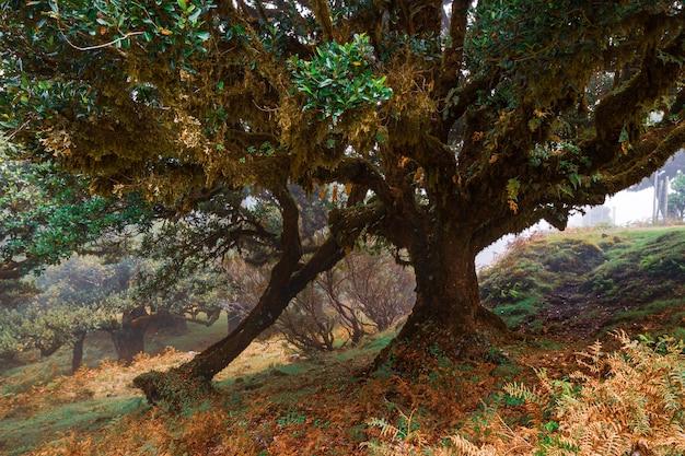 ヨーロッパの木々とポルトガルの森。秋に。 Premium写真