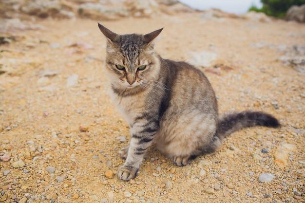 유럽 야생 고양이 felis silvestris 바위에 앉아.