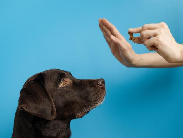 Европейская женщина тренирует собаку с угощением в руке