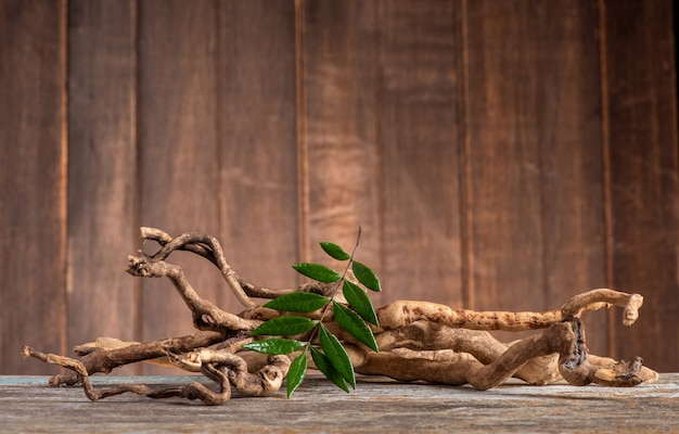 Eurycoma longifolia 잭, 말린 뿌리와 오래 된 나무 배경에 녹색 잎.
