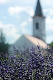 Evangelikus temple in lavender farm in dorgicse near tihany, hungary