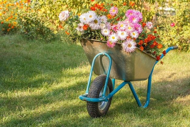 Evening after work in a summer garden. wheelbarrow with flowers on green grass and natural background.