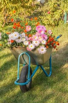 Evening after work in summer garden. wheelbarrow with flowers on green grass.