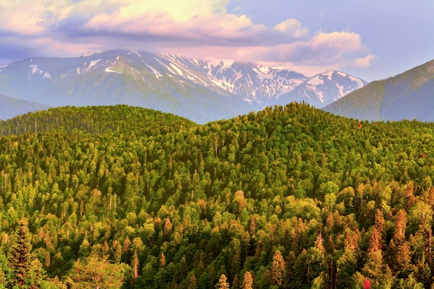 Evening landscape of snow-covered and forested mountains