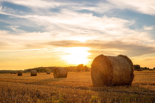 Evening landscape of straw bales against setting sun on the background