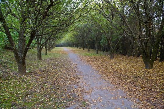 大きな木々のある秋の庭の夜の歩道
