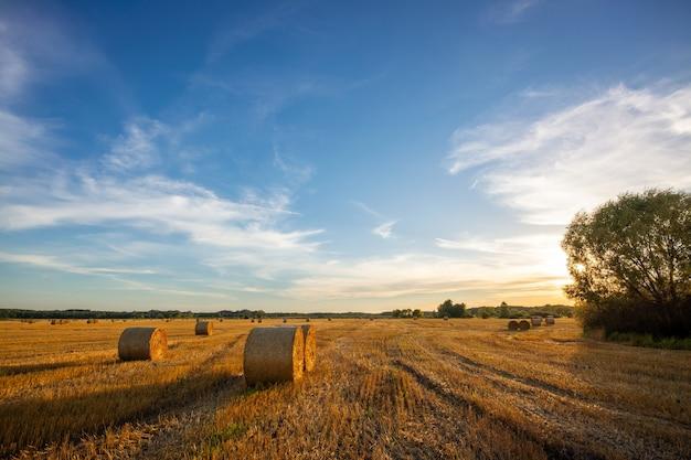 농업 분야에 짚으로 bales의 저녁 사진