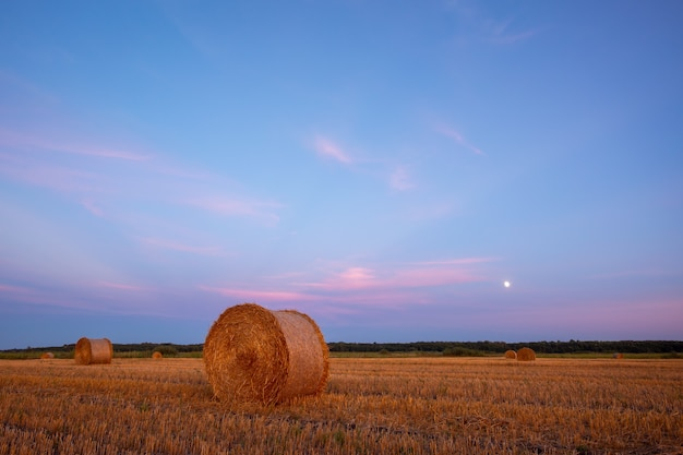 Evening picture during the blue hour of straw bales with rising moon on the background