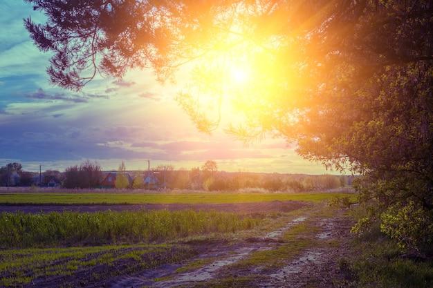 Вечерний сельский пейзаж весной. грунтовая дорога на закате. поле и лес