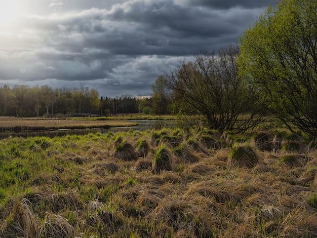 洪水、湿地の牧草地の草、凸状の草地の沼地のハンモックのある夜の田園風景